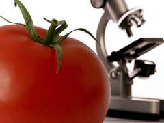 Análises de Alimentos